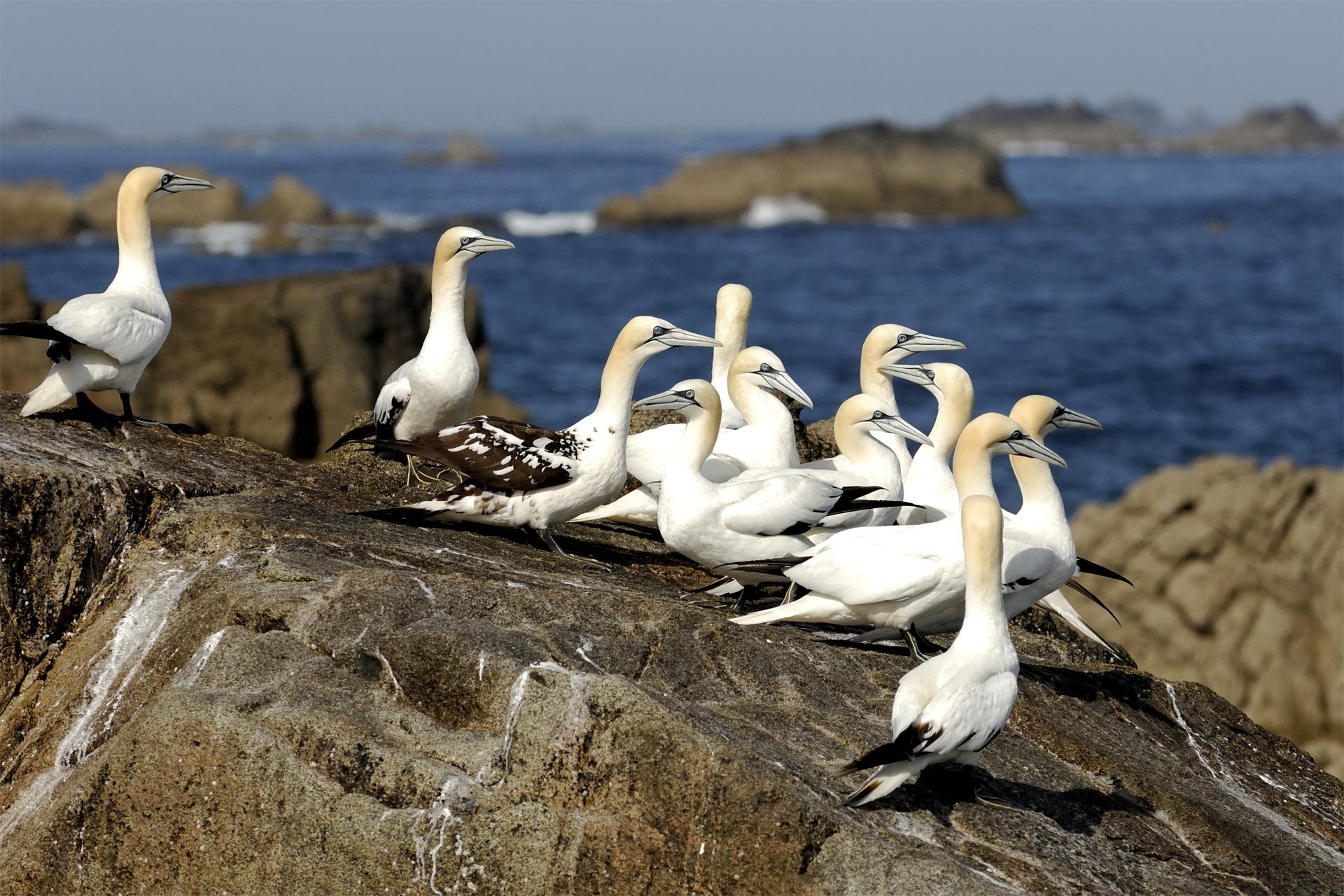 Fon de Bassan, archipel des 7 îles