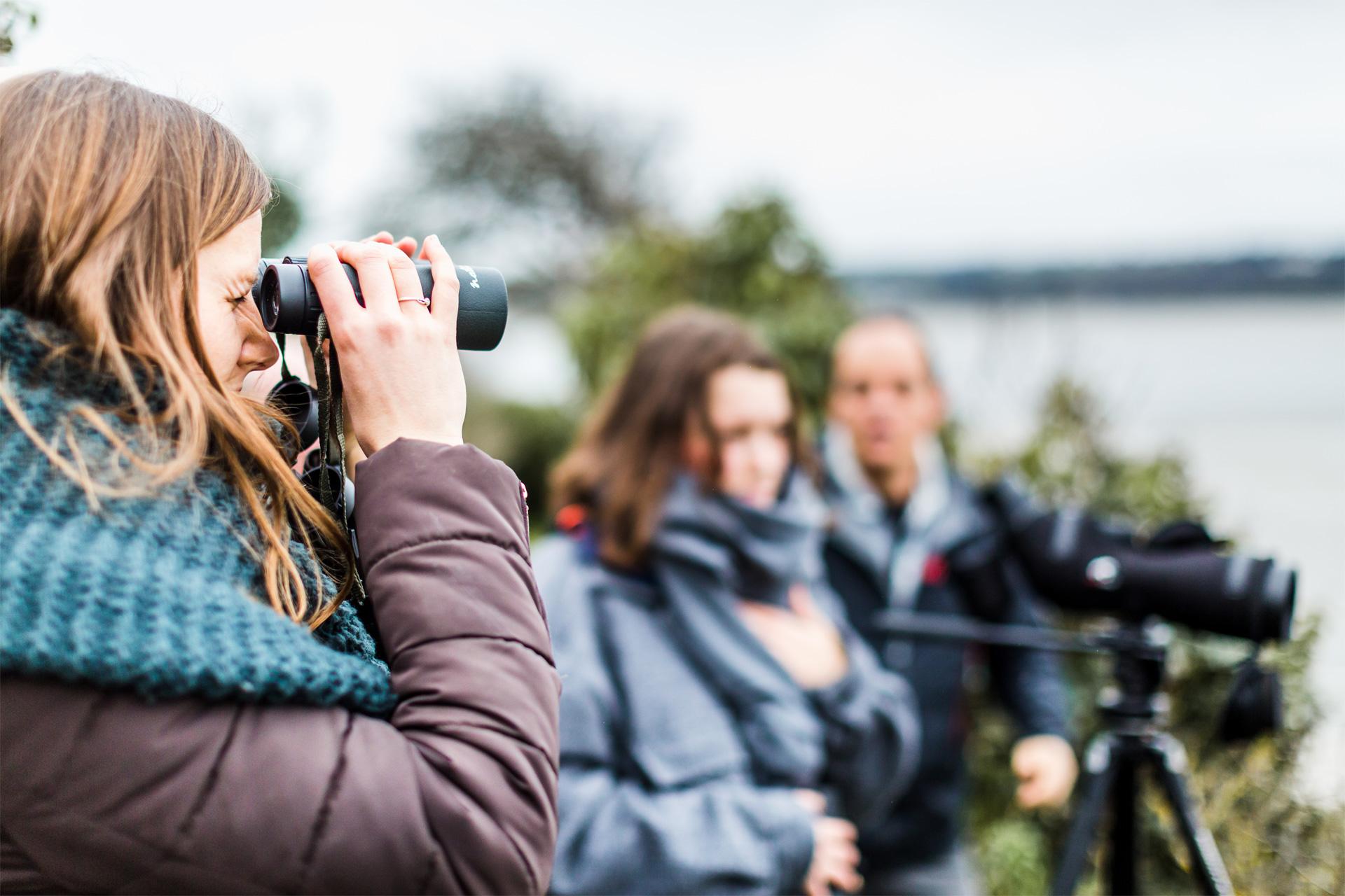 Observation d'oiseaux, Hillion