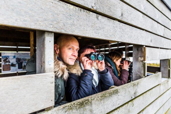 Observatoire d'oiseaux, Hillion